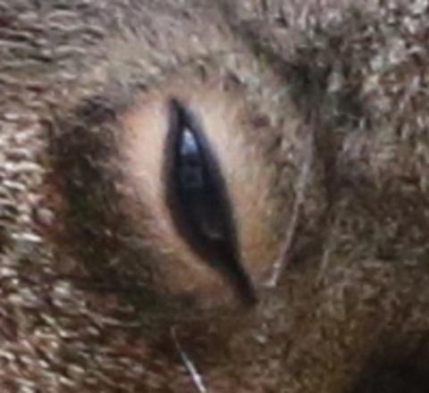 りす 目だけのアップ.jpg
